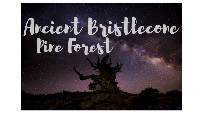 USA – Ancient Bristlecone Pine Forest