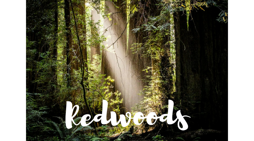 USA – Redwoods