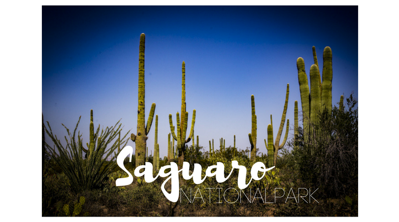 USA – Saguaro Nationalpark