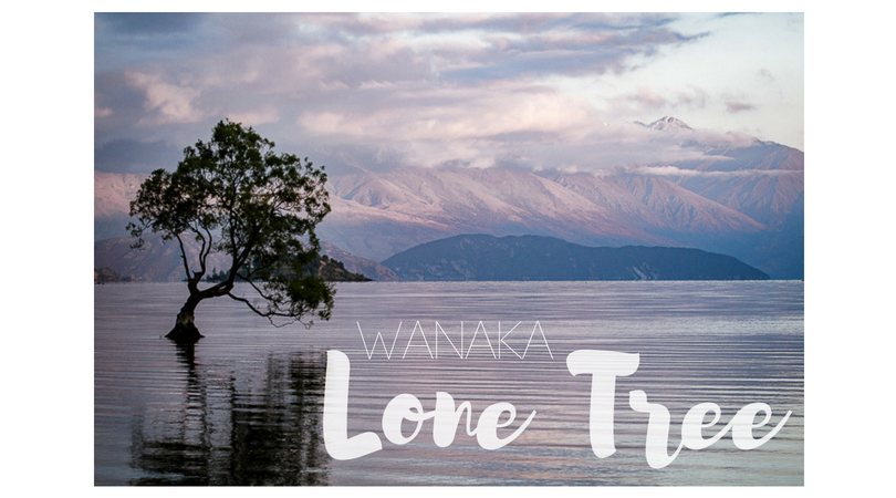 Lone Tree of Wanaka