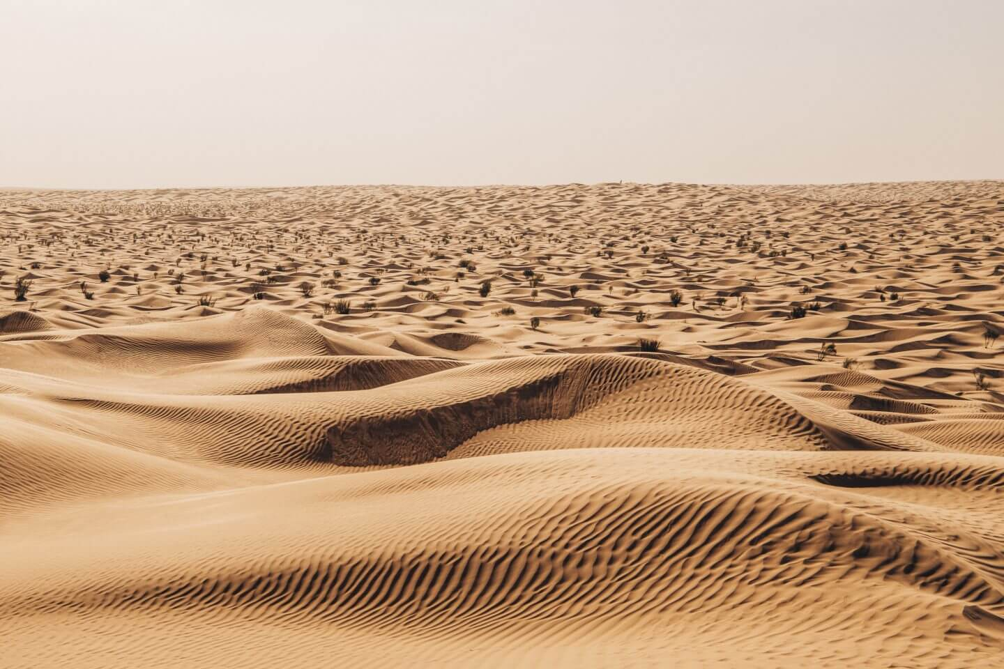 desert of Tunisia