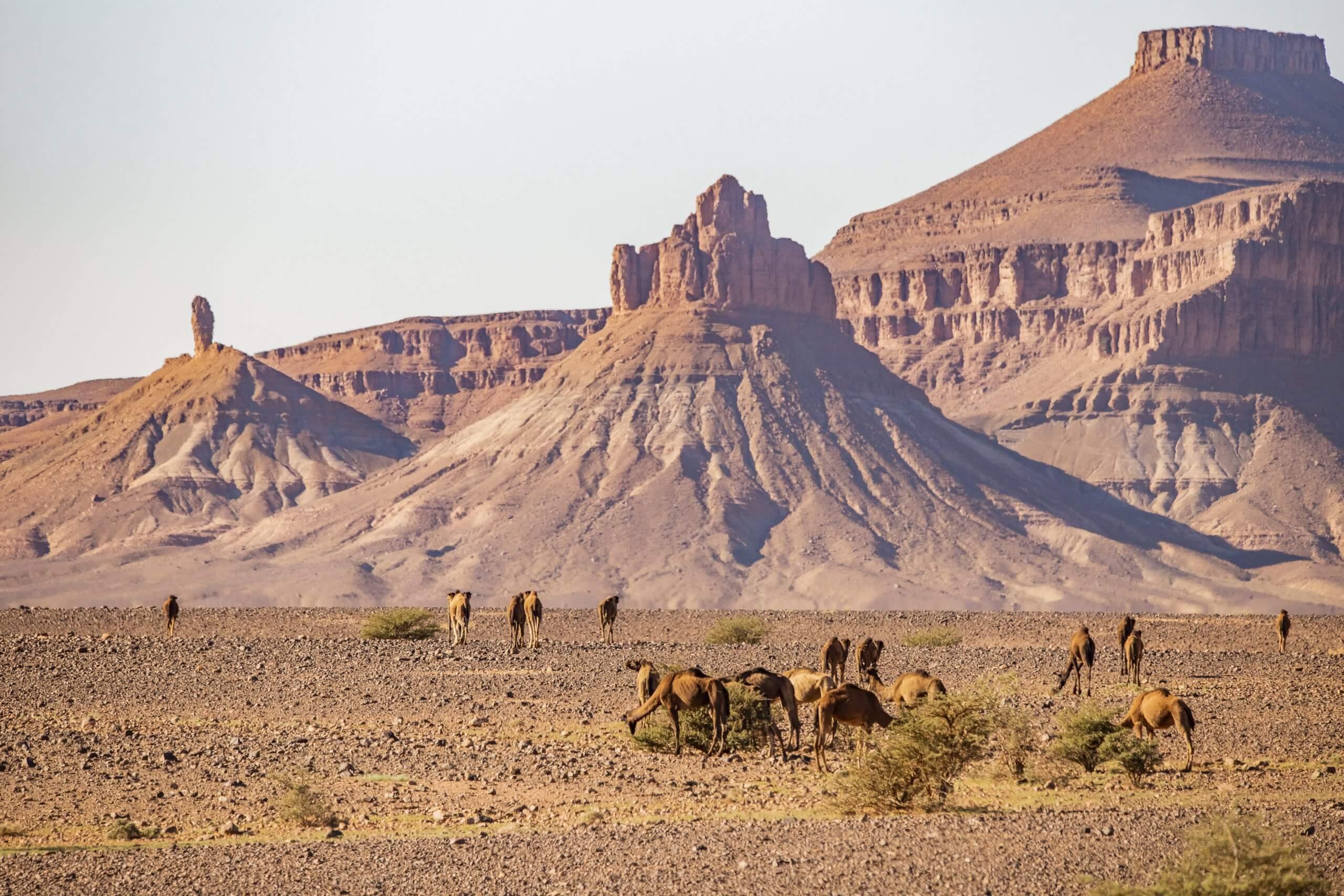 Tafelberge nahe Foum Zguid